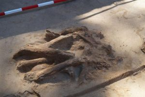 A secondary burial at the site (by Centrum Promocji i Informacji Uniwersytet Mikołaja Kopernika)