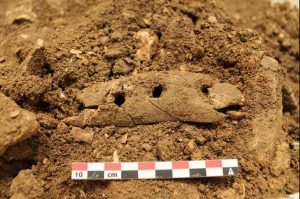 Ivory artefact (by UPI)