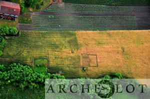 Cropmarks indicating relics of buildings at Skorców (by Piotr Wroniecki)