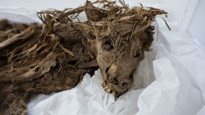 MummifiedDog2
