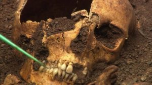 Skull of the skeleton (by BBC News)