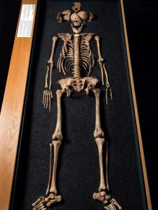 One of the skeletons found at Lant Street (by Independent)