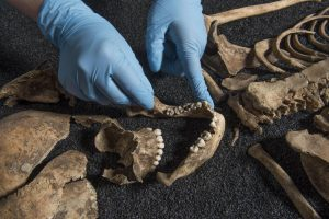 Details of one of the skeletons found at Lant Street (by Independent)