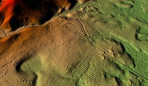 Plantation seen on LiDAR data visualisation (by Maksym Mackiewicz)