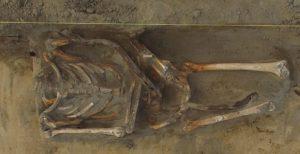 Burial found at the site (by Zofia Kowarska)