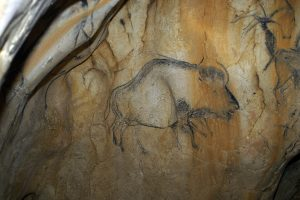Steppe bison drawing in Chauvet-Pont d'Arc cave (by Popular Archaeology)