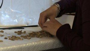 Cremated bones (by BBC News)