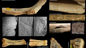Bone analysis for cut marks (by BBC)
