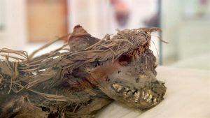 Mummy of a dog (by Fox News Latino)