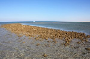 Remains of the harbour's jetty (by Pierre Tallet via Haaretz)