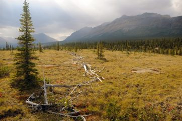 Mysterious caribou fences documented in remote Canadian territories