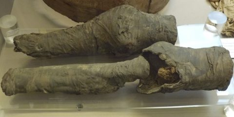 Legs of Queen Nefertari's mummy found in Italian museum