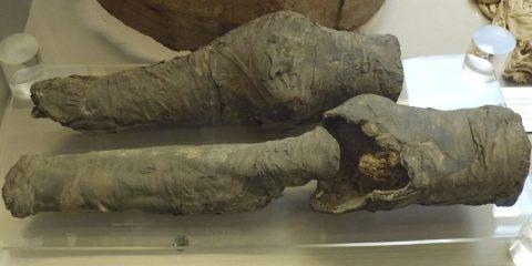 Legs of Queen Nefertari's mummy found in Italian museum