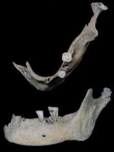 Human jawbone found at the site (by UHI Archaeology Institute)