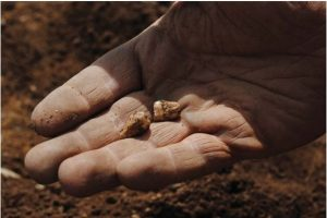 Human teeth are among remains found at Llanfaethlu (by CR Archaeology)