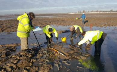 Possible ancient trackway across marshland found