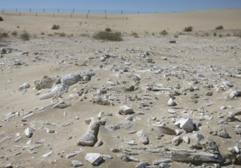 Prehistoric sites found in Emirate of Abu Dhabi
