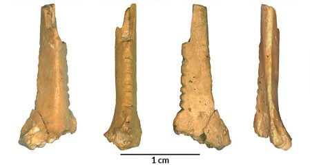 Bones decorated with cuts by Neanderthals found