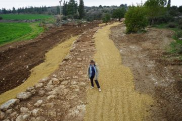 Ancient Roman road unearthed in Israel
