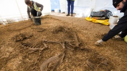 Iron age chariot buried with horses discovered
