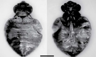 Oldest bed bugs found at Neolithic rock shelter