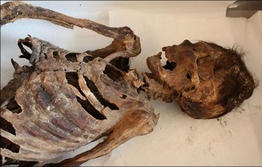 Study reveals details about the 1100-year-old Mongolian burial