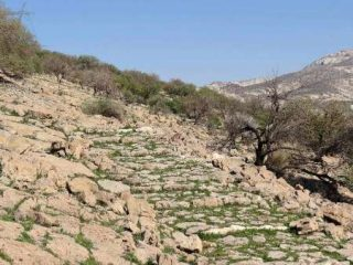 Ancient paved road discovered in southern Iran
