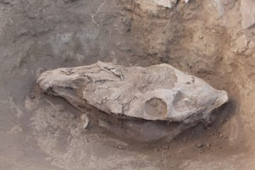 Bronze Age horse burials found in Mongolia