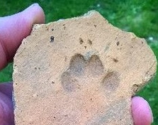 2000-years-old tile with a cat paw print found