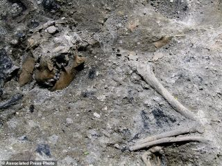 Remains of a dog found in Roman house's ruins