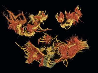 Evidence for plant dye of 3000-year-old textiles found