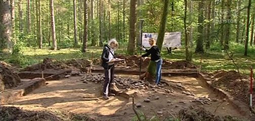 Remains of old field systems discovered within the Białowieża Forest