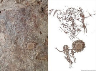 Tens of rock art sites found on small Indonesian island