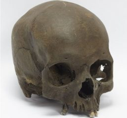 Skull of Iron Age woman found by dog walker
