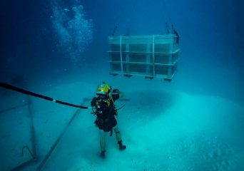Remains of crewmen of sunken World War II airplanes recovered
