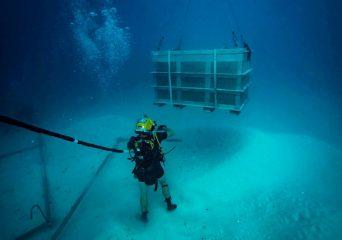 Remains of crewmen of sunken World War II airplanes recovered