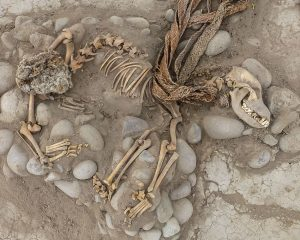 Burial ground for dogs and humans discovered under Lima's ZOO