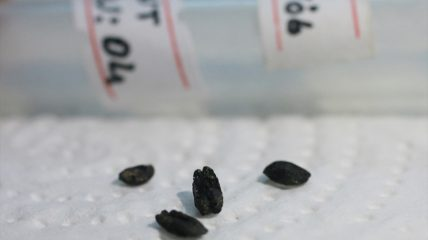 8000-year-old cereal found on a settlement mound in Turkey