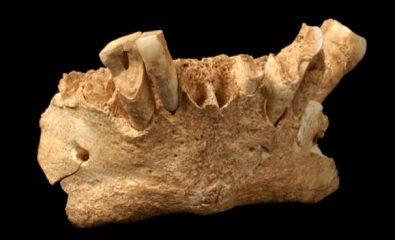 Fibres found in tartar from 1.2-million-year-old teeth reveal hominin diet