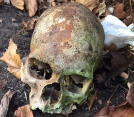 Museum workers unearth 100-years-old skull