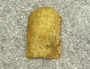 Franklin's expedition's crewmember's toenail analysis complete