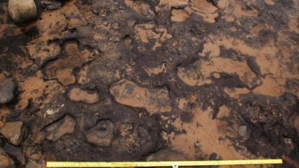 Mesolithic footprints found in Wales