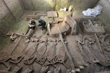 Multiple animal sacrifices found in ancient tomb