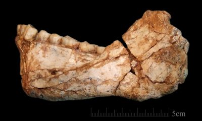 Excavations in Moroccan mine reveal oldest Homo sapiens' remains