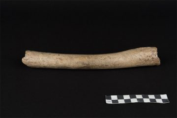 DNA from Neanderthal femur provides timeline for dispersal from Africa