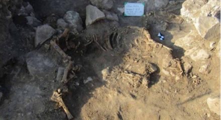 Three horses found in a burial mound